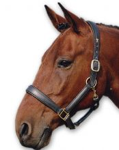 Comfort Padded Headcollar - Brass Fittings